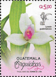 [Flowers - Orchids of Guatemala, type AWH]