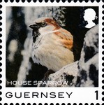 [Definitives - Guernsey Birds, type BQJ]
