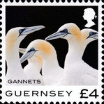 [Definitives - Guernsey Birds, type BQZ]