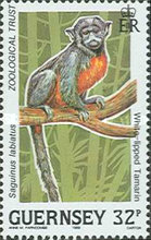 [Animals from the Rain Forest, Typ QD]