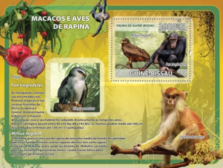 [Fauna and Flora - Macaques, Birds of Prey & Fruits, Typ ]