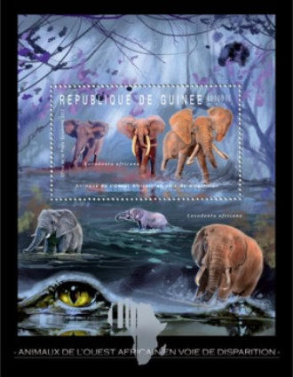 [Endangered Animals of West Africa - Elephants, Typ ]