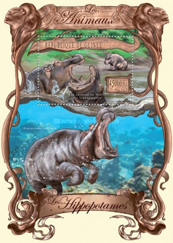 [Animals - Hippos, type ]