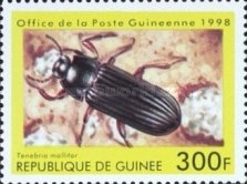 [Beetles from Around the World, Typ BDJ]