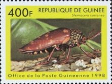 [Beetles from Around the World, Typ BDK]