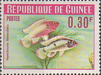 [Guinea Fish, Typ BR]