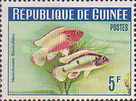 [Guinea Fish, Typ BR1]
