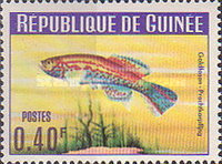 [Guinea Fish, Typ BS]