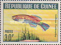 [Guinea Fish, Typ BS1]
