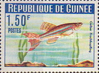 [Guinea Fish, Typ BV]