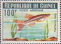 [Guinea Fish, Typ BV1]
