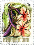 [Flowers of Guinea, Typ OR]