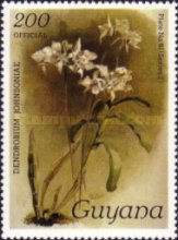 [Orchids - Overprinted