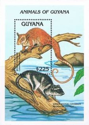 [Animals of Guyana, Typ ]