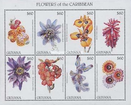 [Flowers of the Caribbean, Typ ]