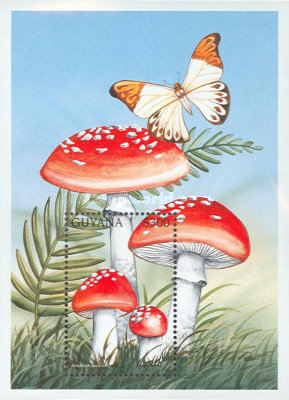 [Fungi of the World, Typ ]