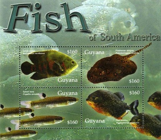 [Freshwater Fish of South America, Typ ]