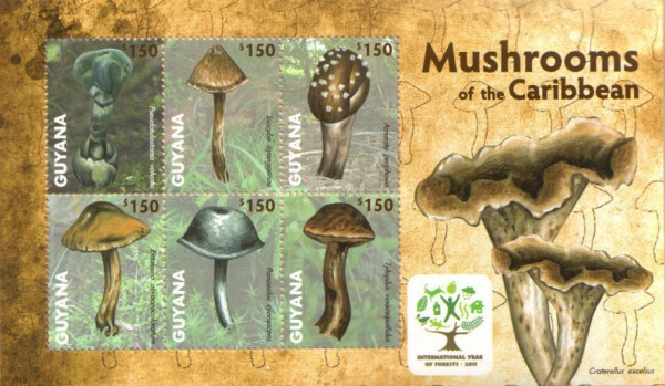 [Mushrooms of the Caribbean, Typ ]