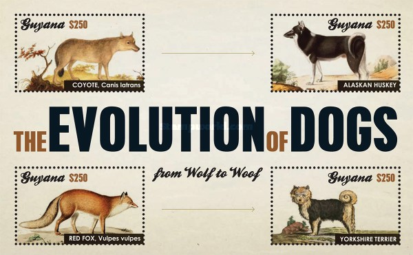 [The Evolution of Dogs, Typ ]