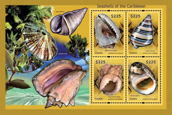 [Seashells of the Caribbean, Typ ]