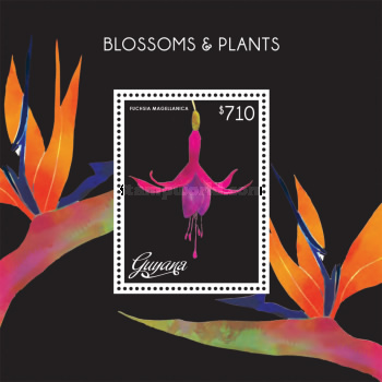 [Blossoms & Plants, Typ ]