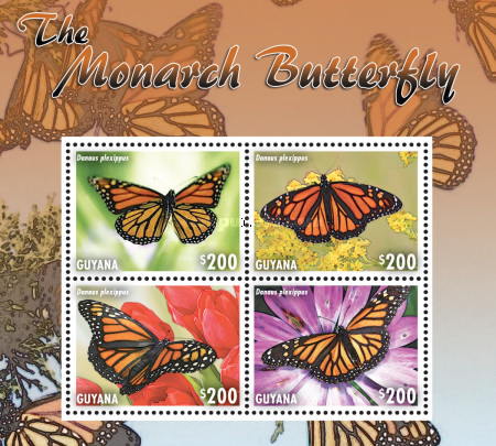 [Butterflies - The Monarch Butterfly, Typ ]