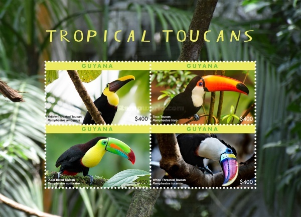 [Birds - Tropical Toucans, Typ ]