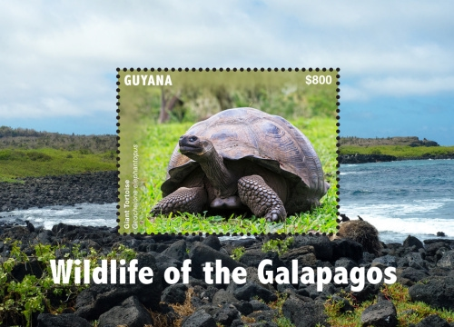 [Wildlife of the Galapagos, Typ ]