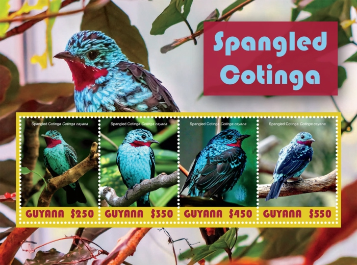 [Birds - Spangled Cotinga, Typ ]