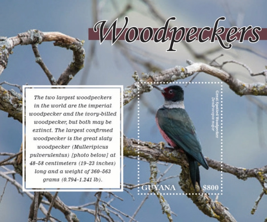 [Birds - Woodpeckers, Typ ]