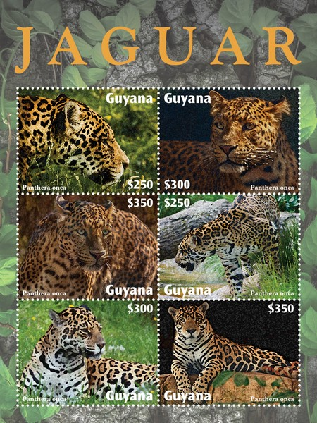 [Fauna - Jaguar, type ]