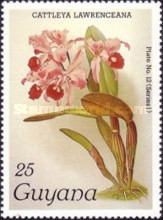 [Orchids, Typ ABB]