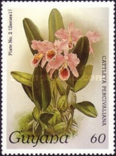 [Orchids, Typ ABC]