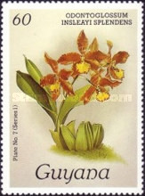 [Orchids, Typ ABD]