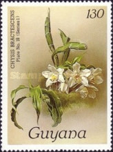[Orchids, Typ ABL]