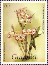 [Orchids, Typ ACN]