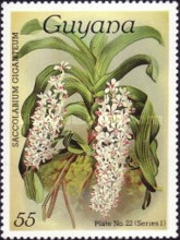 [Orchids, Typ ACO]