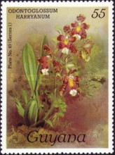 [Orchids, Typ ACP]
