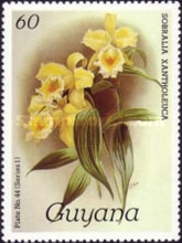 [Orchids, Typ ACR]