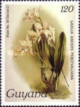 [Orchids, Typ ACT]