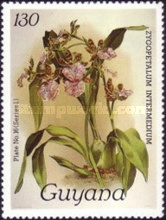 [Orchids, Typ ACU]
