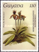 [Orchids, Typ ACV]