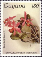 [Orchids, Typ ACW]