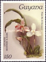 [Orchids, Typ ACZ]