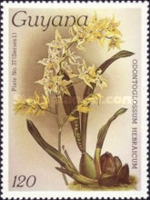 [Orchids, Typ AFQ]