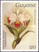 [Orchids, Typ AFR]