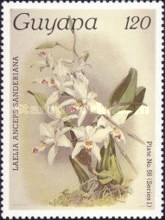 [Orchids, Typ AFS]
