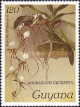 [Orchids, Typ AFU]