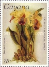 [Orchids, Typ AHB]