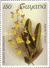 [Orchids, Typ AHD]